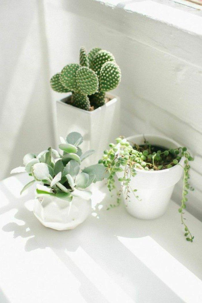 exotische-Topfpflanzen-Kakteen-schön-arraniert