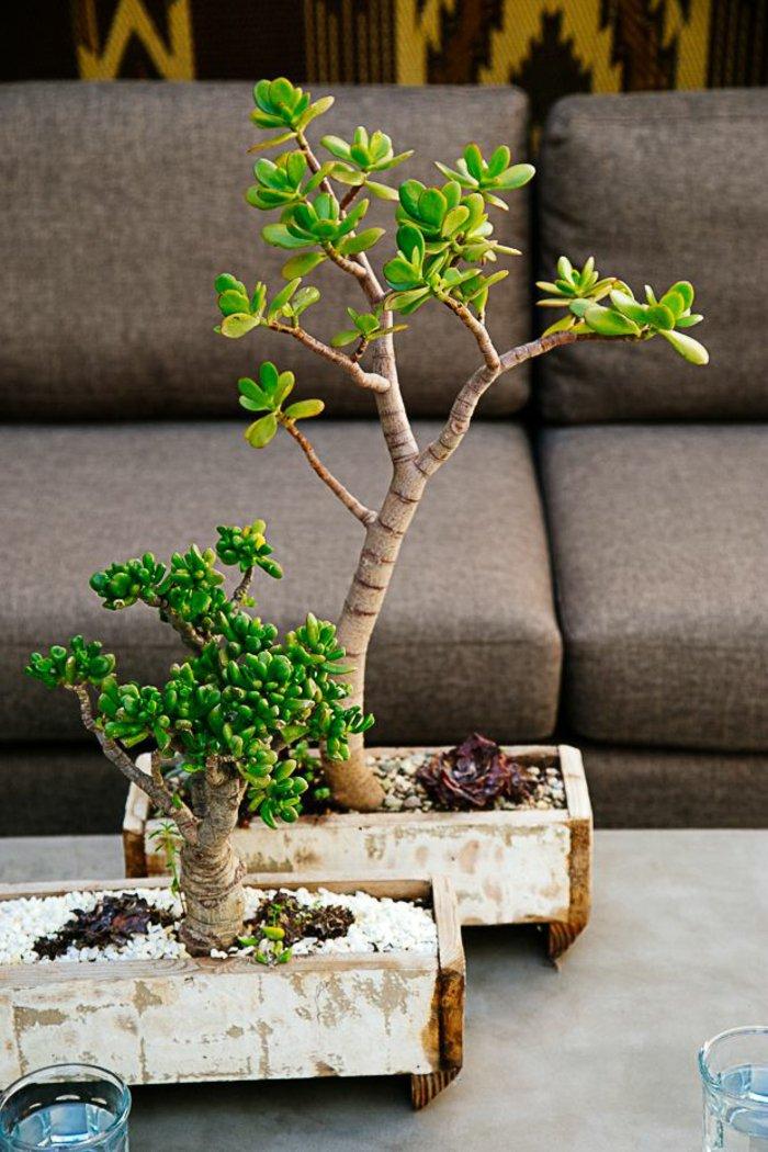 52 frische ideen f r zimmerpflanzen for Spezielle zimmerpflanzen