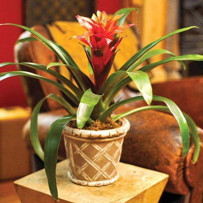 exotische-Topfpflanzen-in-warmen-Farben