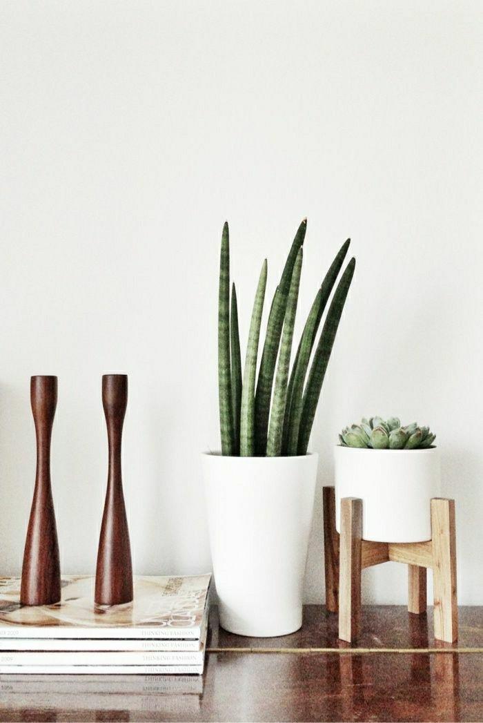 exotische-grüne-Zimmerpflanzen-Kakteen-für-ein-schlichtes-Interieur