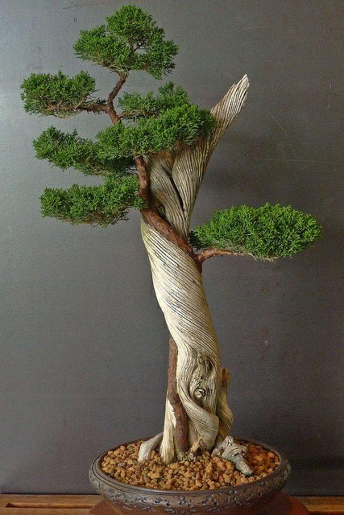 fantastische-Idee-für-Zimmerpflanze-der-japanische-Bonsai-Baum