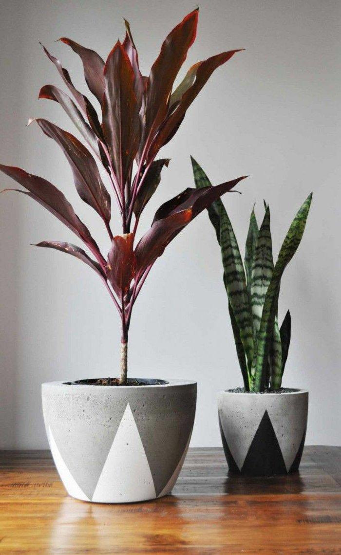 fantastische-Topfpflanzen-die-in-Höhe-wachsen
