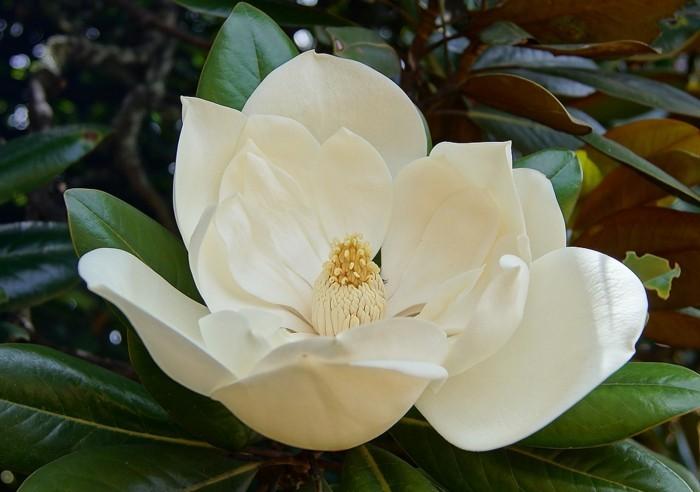 die farbe magnolia verschiedene ideen f r. Black Bedroom Furniture Sets. Home Design Ideas