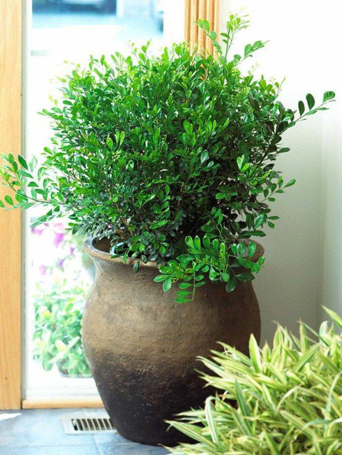 Große Und Attraktive Topfpflanzen Für Zu Hause