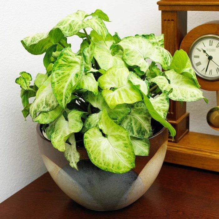 herrliche-Topfpflanzen-mit-großen-Blättern