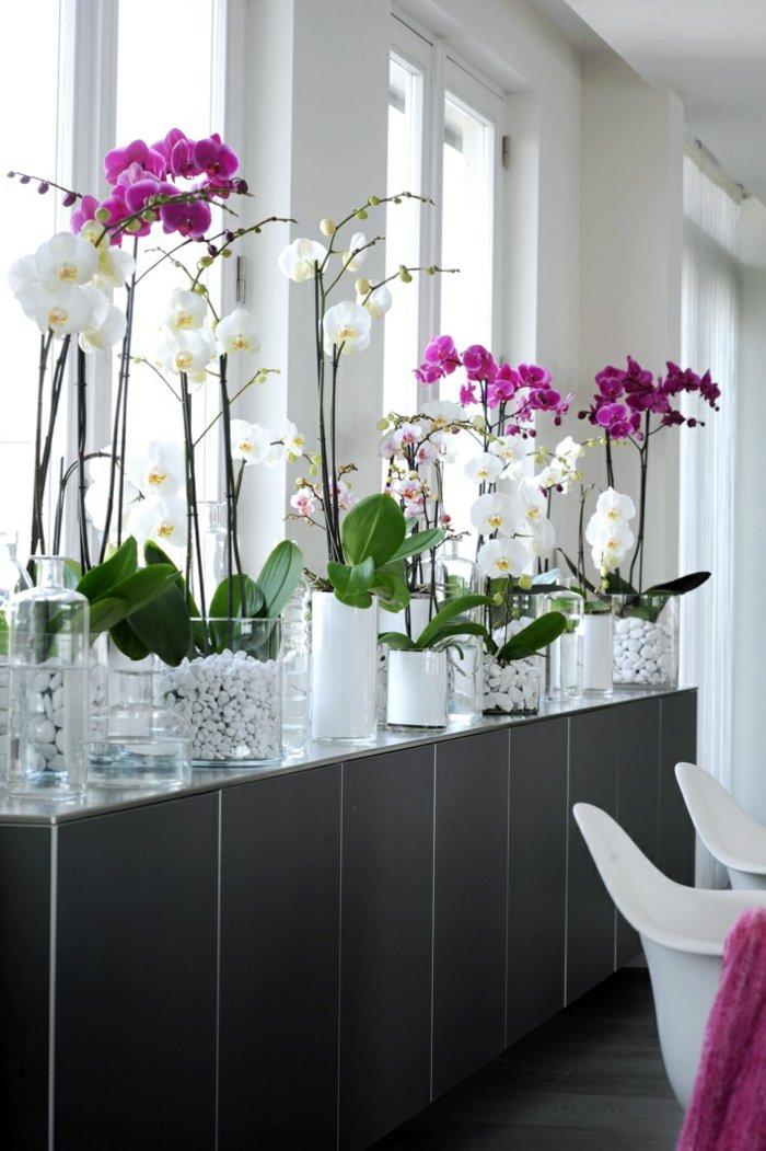 herrliche-Zimmerblumen-weiße-und-lila-Orchideen