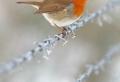 80 coole Winterbilder zum Inspirieren!