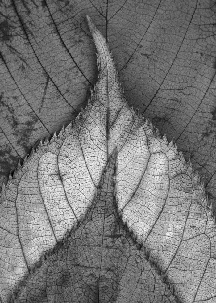 künstlerische-Fotografie-Blätter-von-nah
