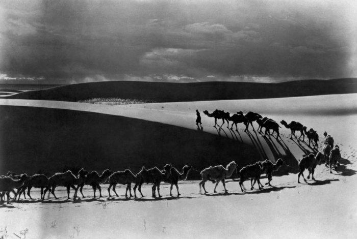 künstlerische-Fotografie-Kamele-in-der-Wüste