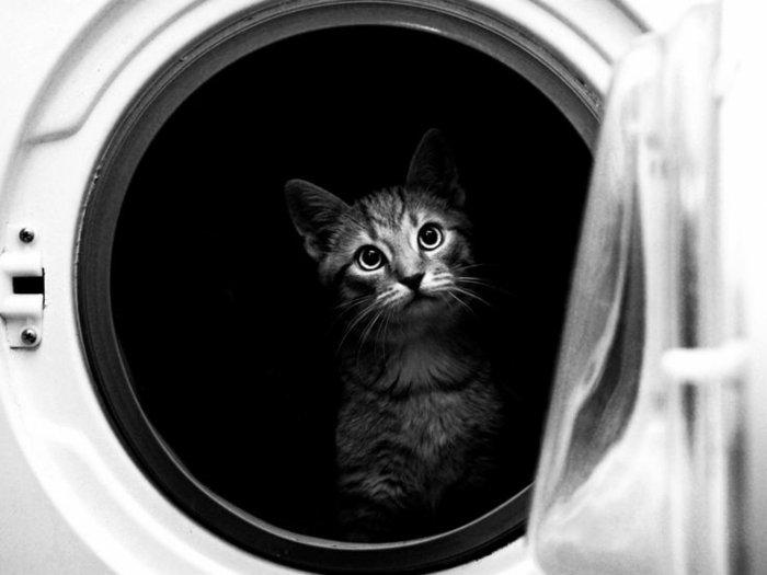 künstlerische-Fotografie-süßes-Kätzchen-in-der-Waschmaschine