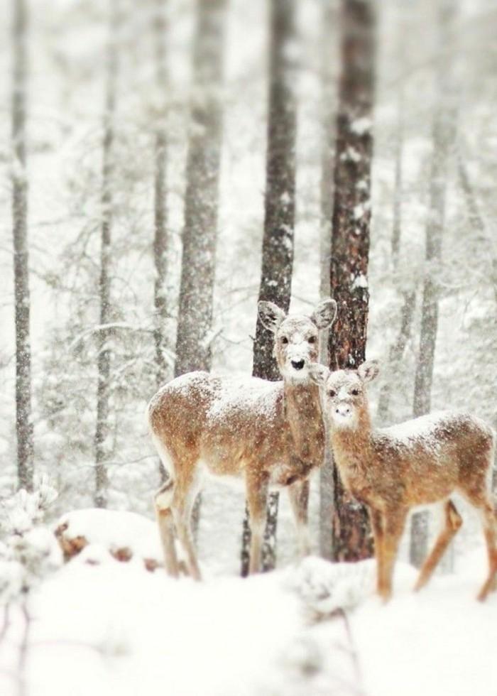 kleine-süße-Rehe-im-Schnee-Winterimpressionen