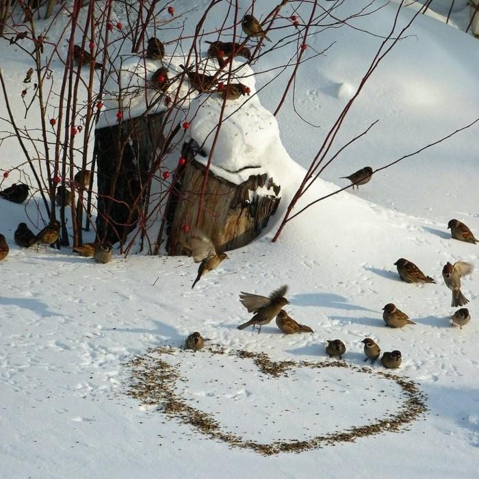 lustige-Bilder-Winter-die-Vögel-im-Schnee-füttern