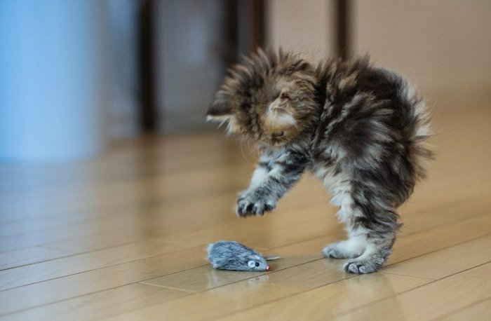 Lustige Bilder Katzenbabys