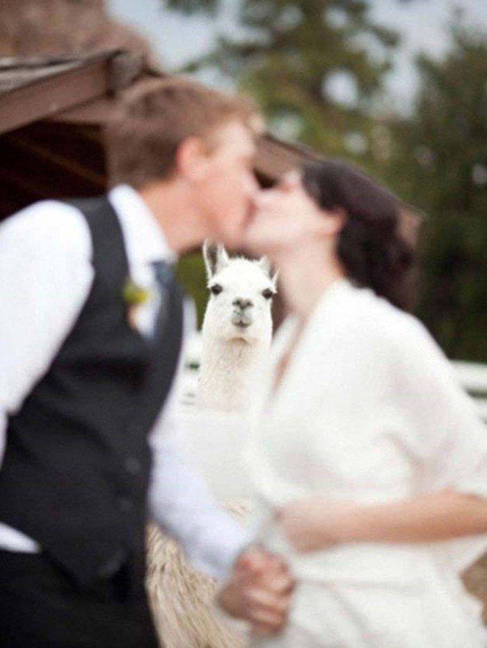 lustige-Hochzeitsfotos-komischer-Foto-Bomber