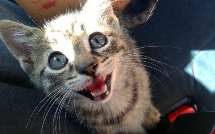 Witzige Katzen Bilder