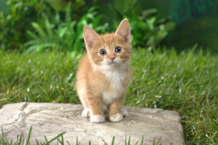lustige-Katzen-süße-Babykatzen-kleines-rostrotes-Kätzchen