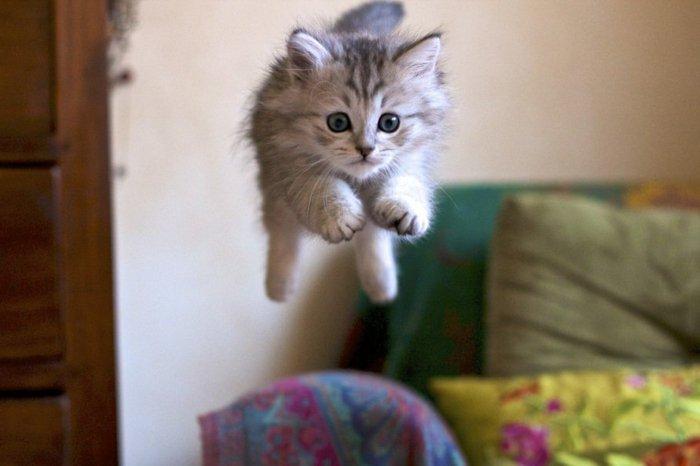 lustige-Katzenbilder-Babykatze-in-Sprung