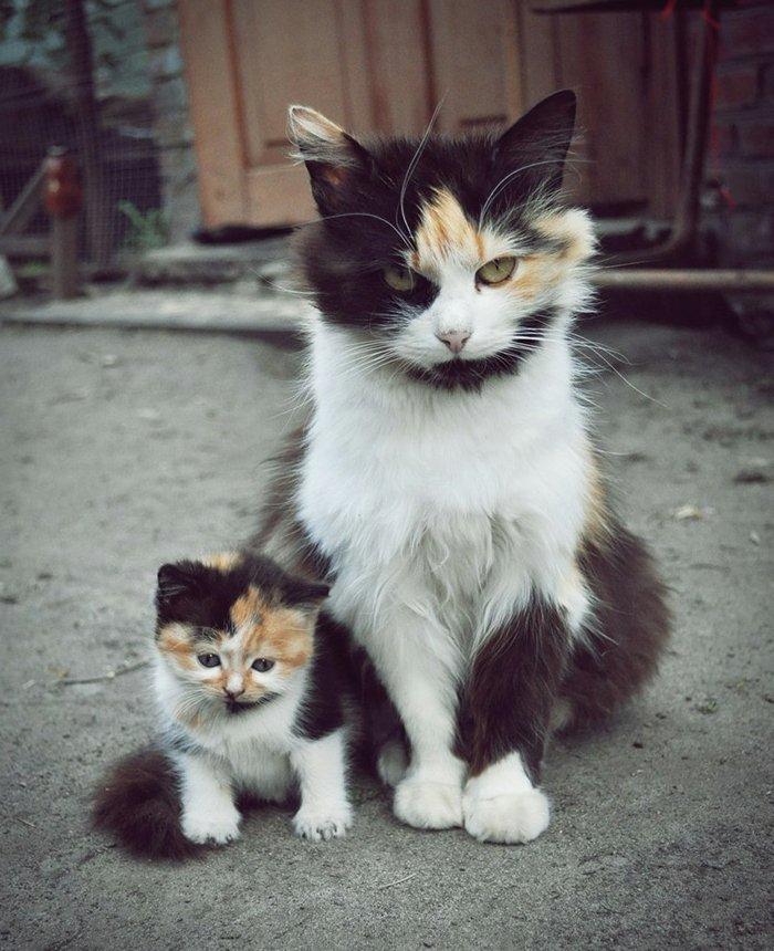 Süße Katzen,...