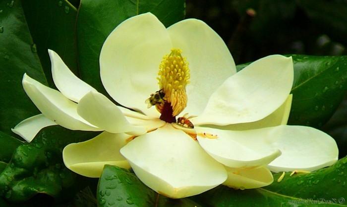 magnolie farbe ihr traumhaus ideen. Black Bedroom Furniture Sets. Home Design Ideas