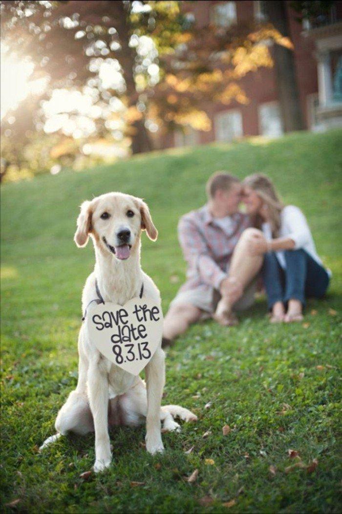 originelle-Hochzeitsfotografie-Hund-mit-Einladung