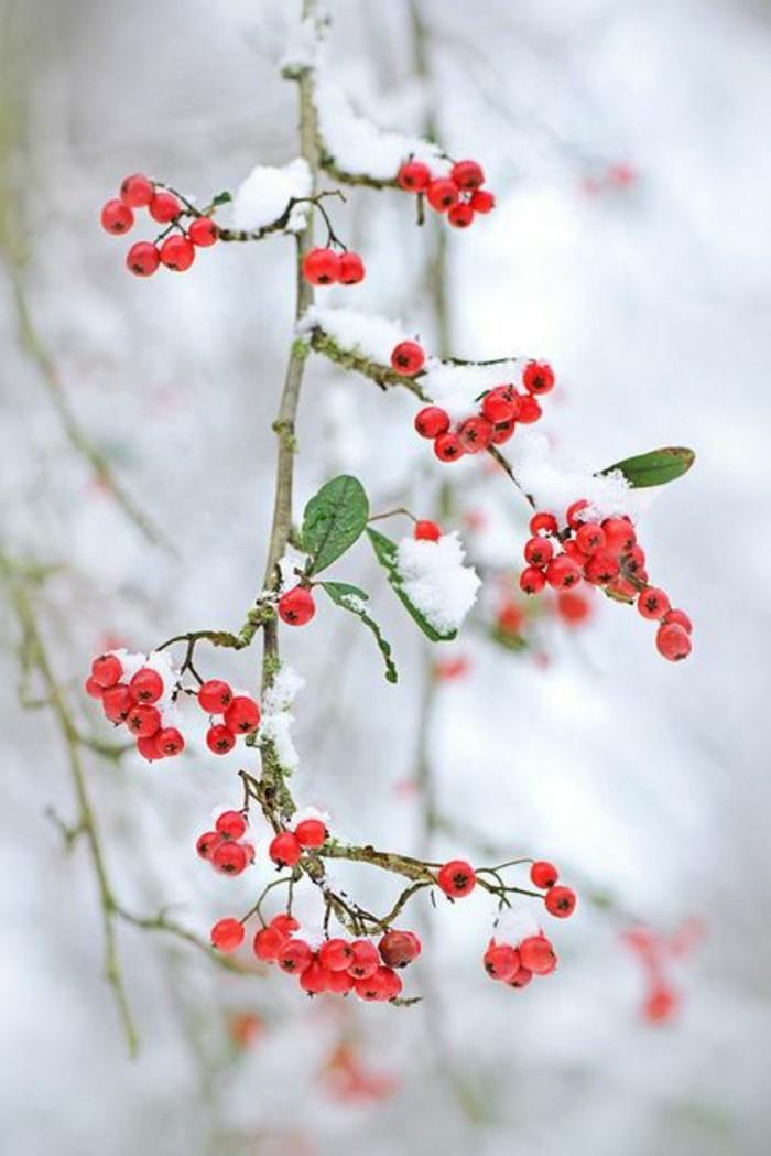 romantische-Winterbilder-Schneebeeren-schöne-Illustration
