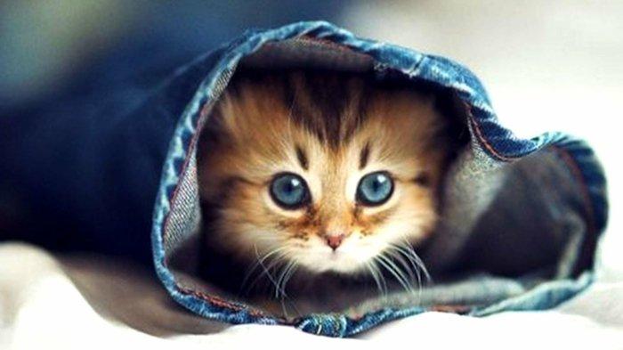 süße-Babykatzen-Bilder-von-Babykatzen