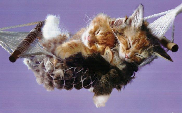 süße-Babykatzen-schlafend-in-Schaukel-Hängematte-für-Kätzchen