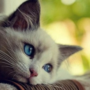 Süße Katzen, fotografiert im richtigen Moment
