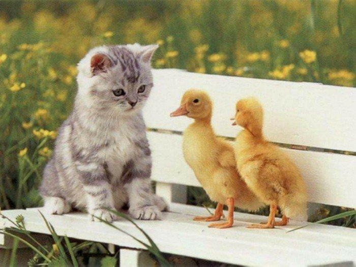 Süße Katzen, fotografiert im richtigen Moment - Archzine.net