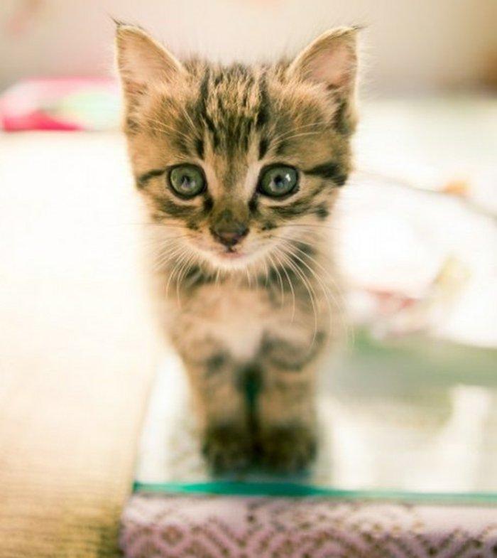 süße-Katzen-Babys-neugieriger-Blick