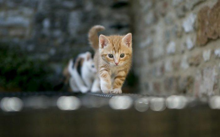 süße-Katzen-laufend-auf-Schnur
