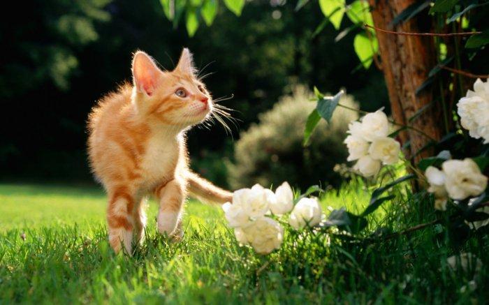 süße-Katzen-spielend-in-der-Natur