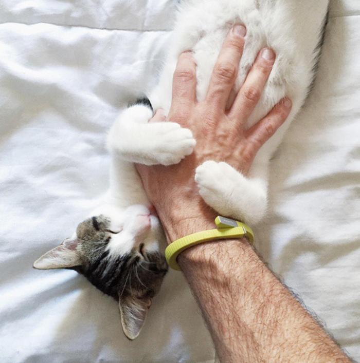 süße-Katzen-wunderschöne-Bilder-von-Babykatzen