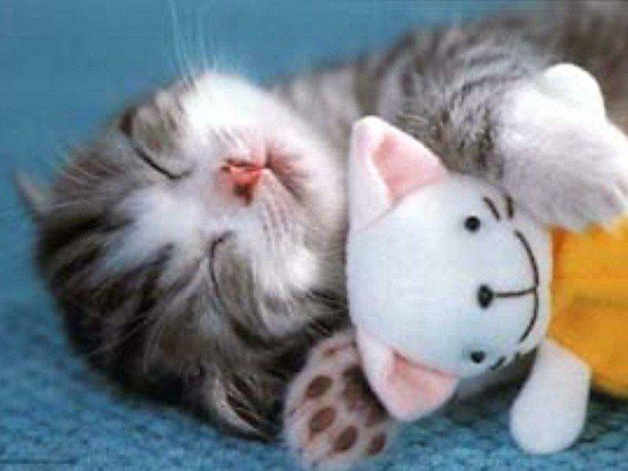 süße-Katzenbabys-Bilder-süße-Katzenbabys-die-schlafen