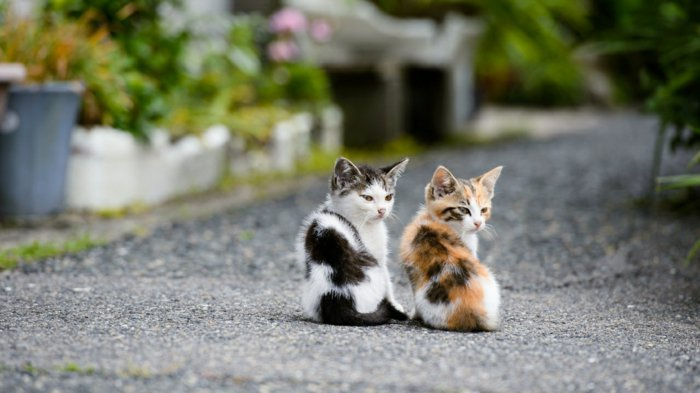 süße-Katzenbabys-kleine-böse-Kätzchen