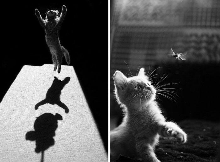 schöne-Kunstfotografie-Fotos-von-springenden-Kätzchen
