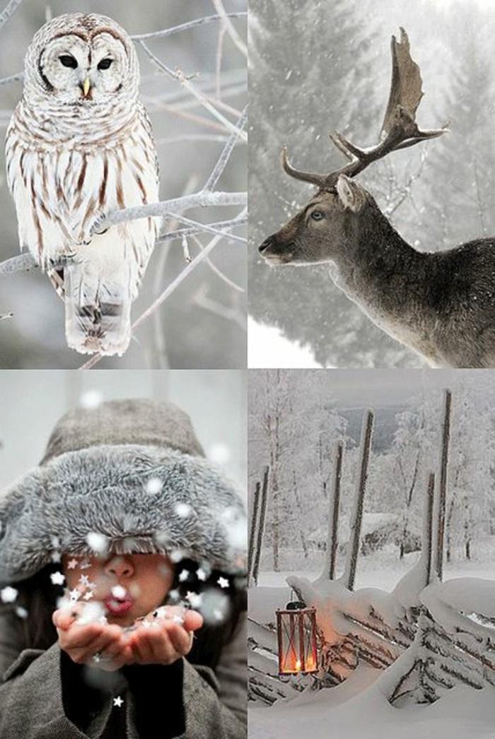 schöne-Winterbilder-mit-Tieren-Romantik