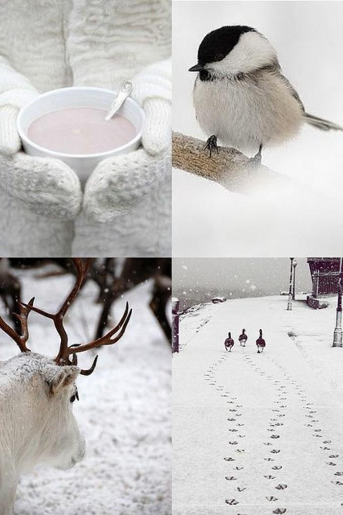 schöne-Winterbilder-sympatische-Fotografien-mit-WIntermotiven
