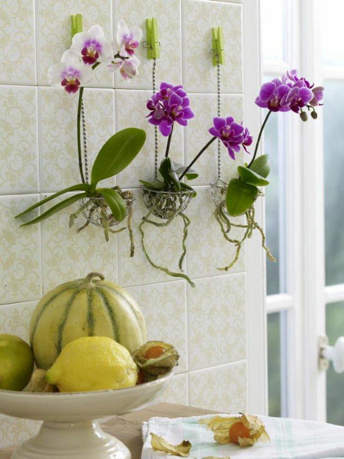 schöne-Zimmerblumen-als-Wanddekoration-weiße-und-lila-Orchideen