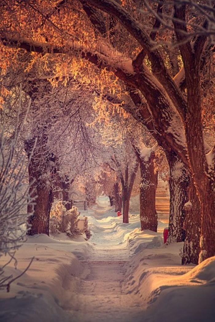 schönes-Winterbild-Pfad-im-Schnee-unter-den-Bäumen