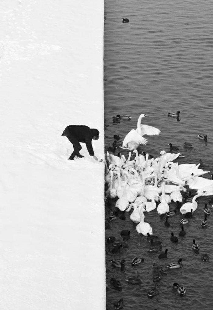 schwarz-weiße-Fotokunst-Mann-fütternd-die-Schwäne