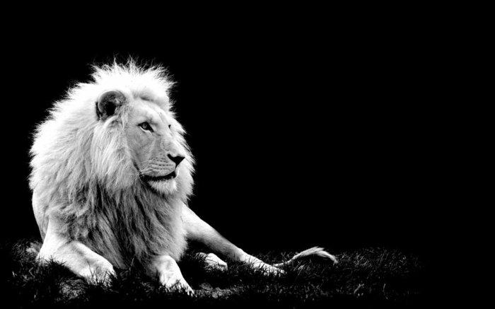 schwarz-weiße-Kunstfotografie-Foto-von-Löwe