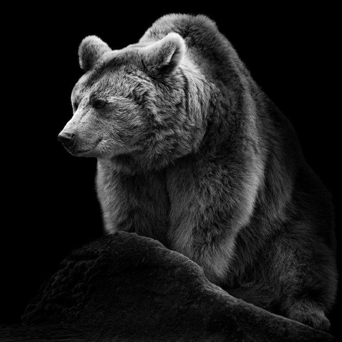 schwarz-weiße-Kunstfotografie-Foto.von-Bär
