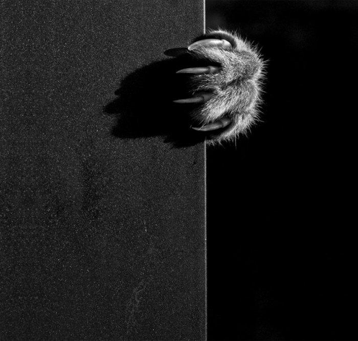 schwarz-weiße-künstlerische-Fotografie-kleine-Katzenpfote
