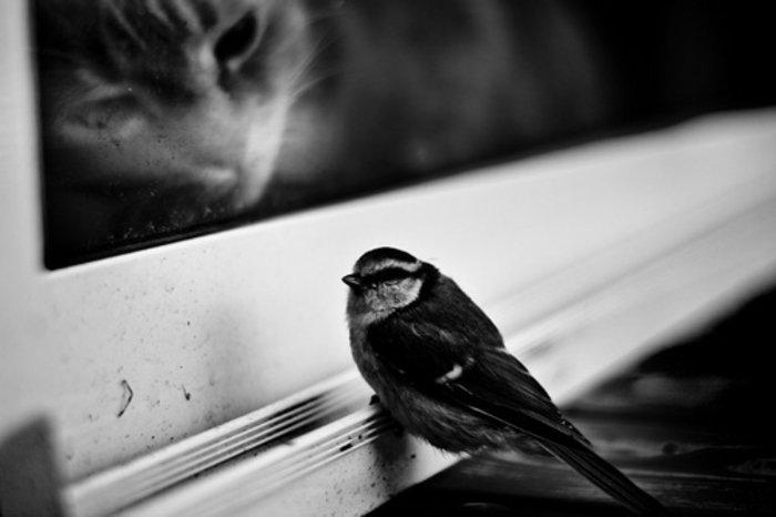 schwarz-weiße-künstlerische-Fotografie-kleiner-Vogel