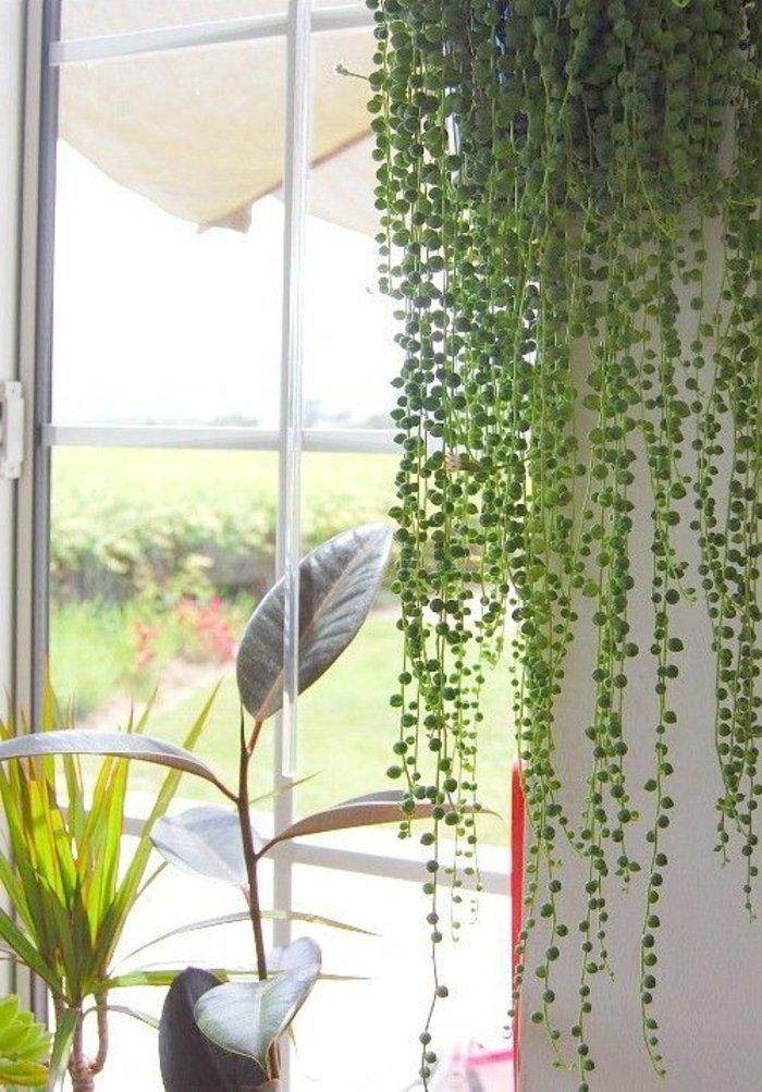 verschiedenartige-grüne-Zimmerpflanzen-für-ein-frisches-Interieur