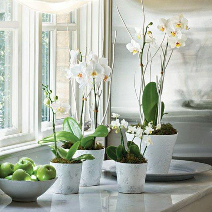 weiße-Orchideen-als-Zimmerblumen-gestellt-am-Fenster