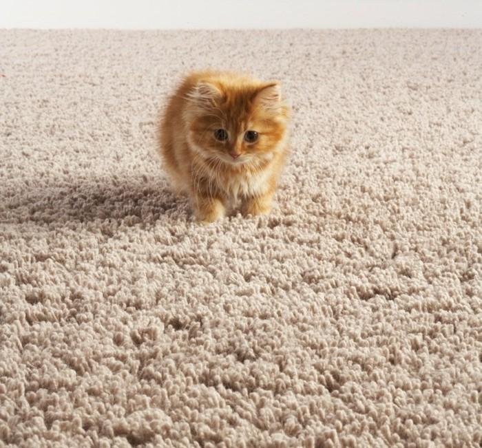 weicher-schöner-teppich-in-grau-eine-katze-darauf
