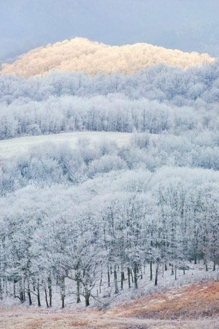 wunderschöne-inspirierende-Winterlandschaften-Bilder-endlose-eisige-Wälder