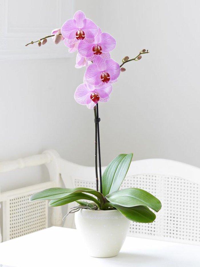wunderschöne-zärtliche-Orchidee-in-Pflanzentopf